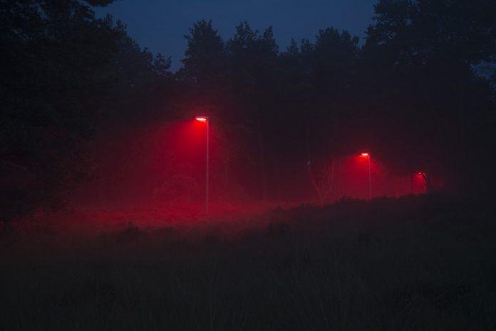 Licht op natuur